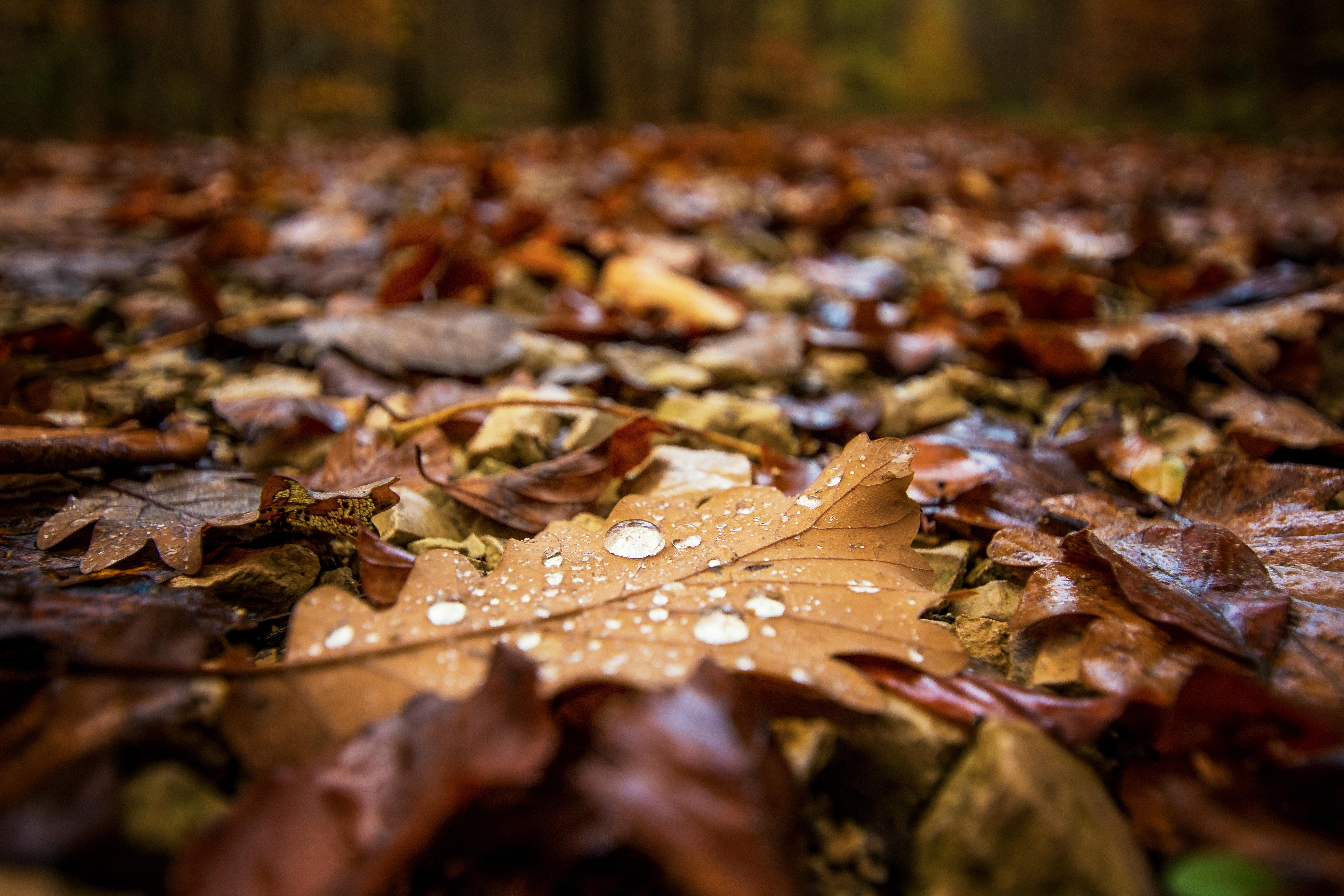 rando inside, randonnée, randonner pluie